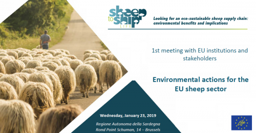 SheepToShip meeting
