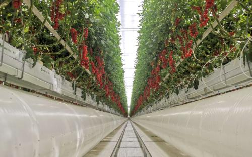 Soilless-go, un nuovo progetto di ricerca per le coltivazioni senza suolo