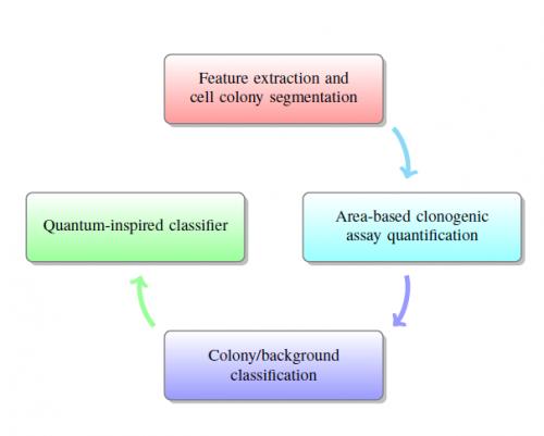 Schema concettuale dell'approccio multidisciplinare proposto che coinvolge l'elaborazione delle immagini, l'apprendimento automatico, la teoria dell'informazione quantistica e la biologia cellulare